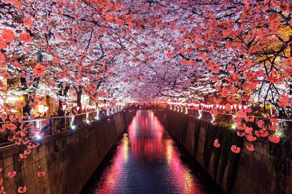 japanese skincare routine cherry blossoms in japan river canal pink lovely peaceful
