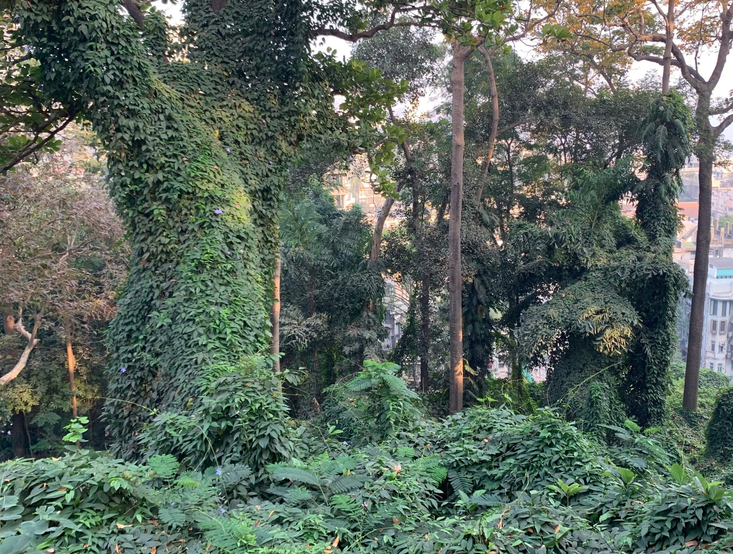 the hanging gardens of mumbai lush greenery india tourism park view