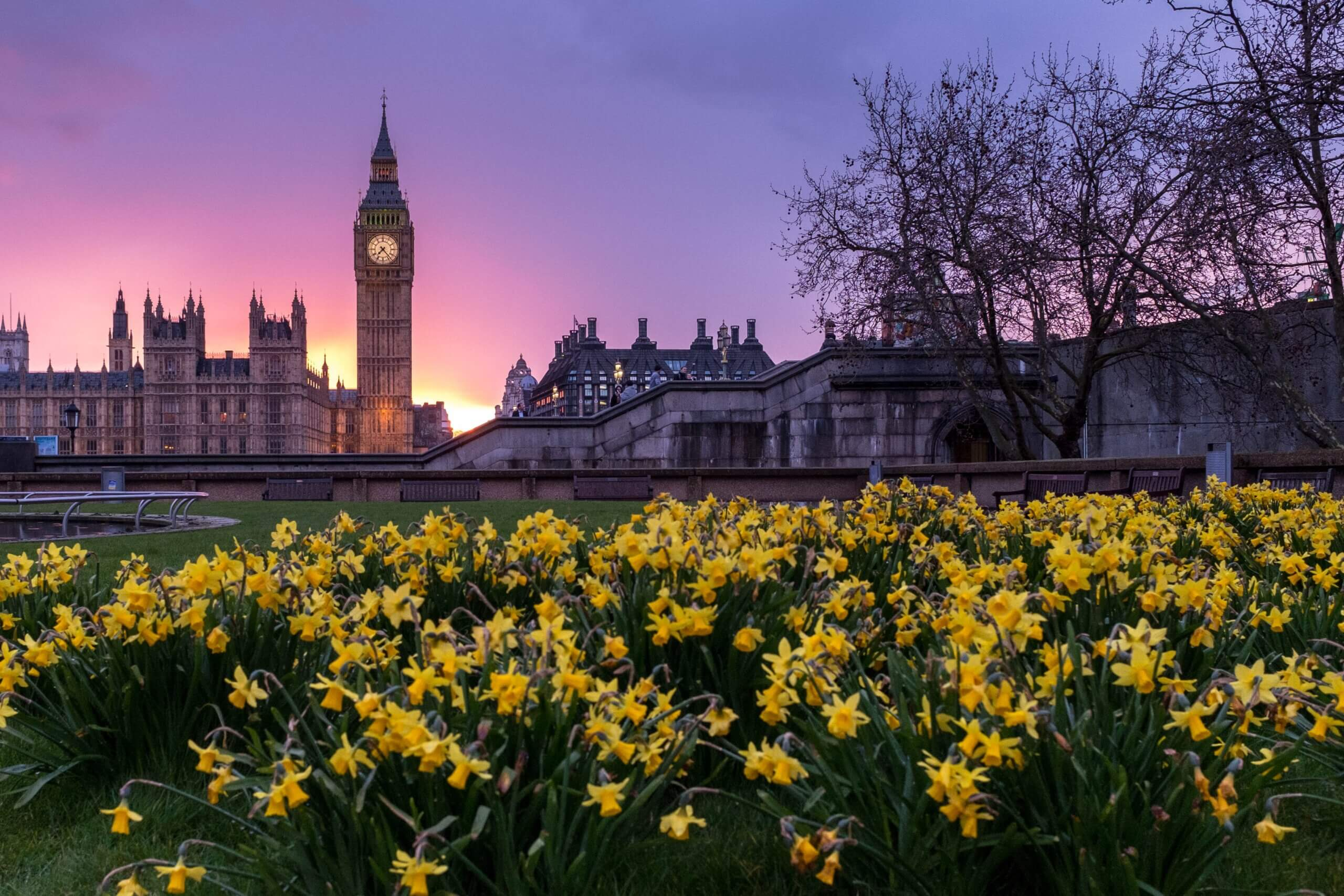 westminster london england united kingdom uk sunset big ben clock daffodils europe beautiful