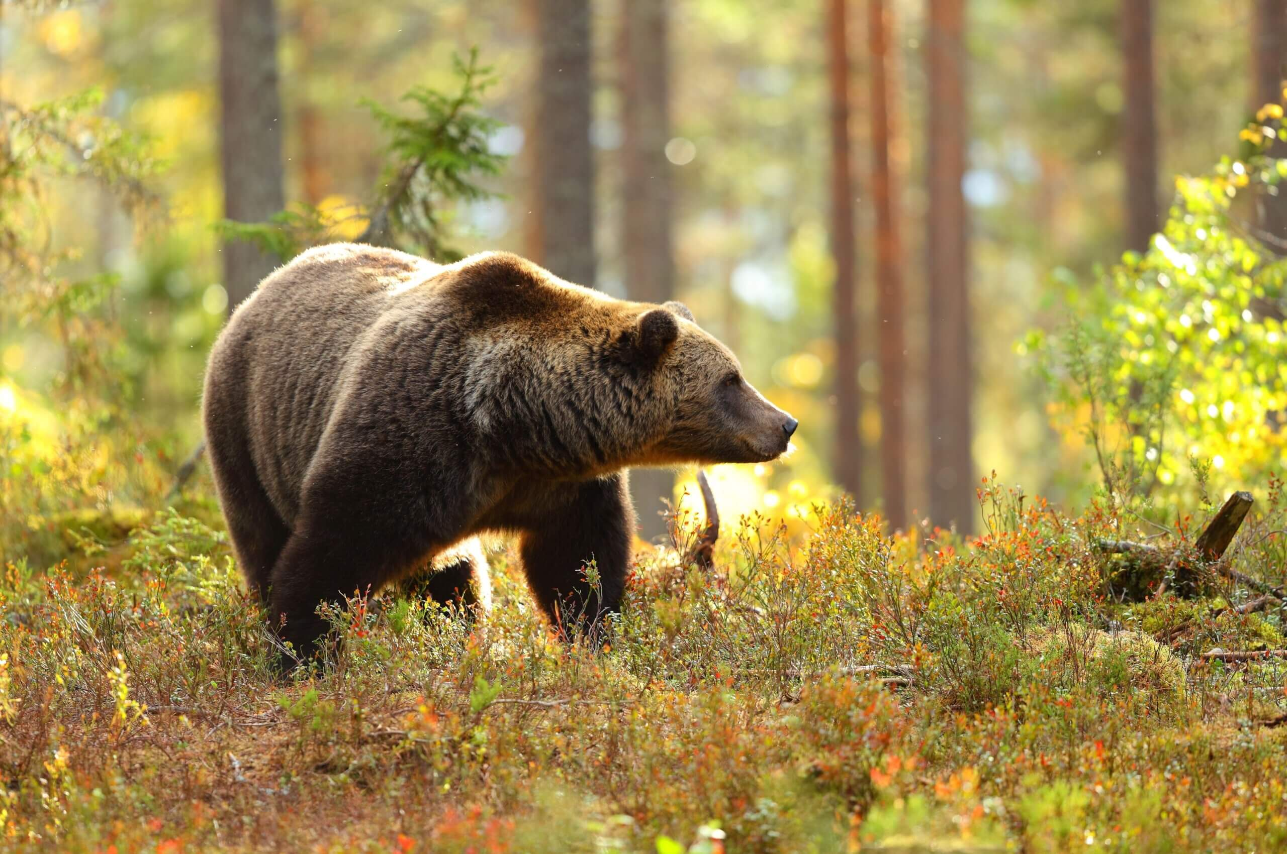 The Best Hot Spots to See Wildlife in California