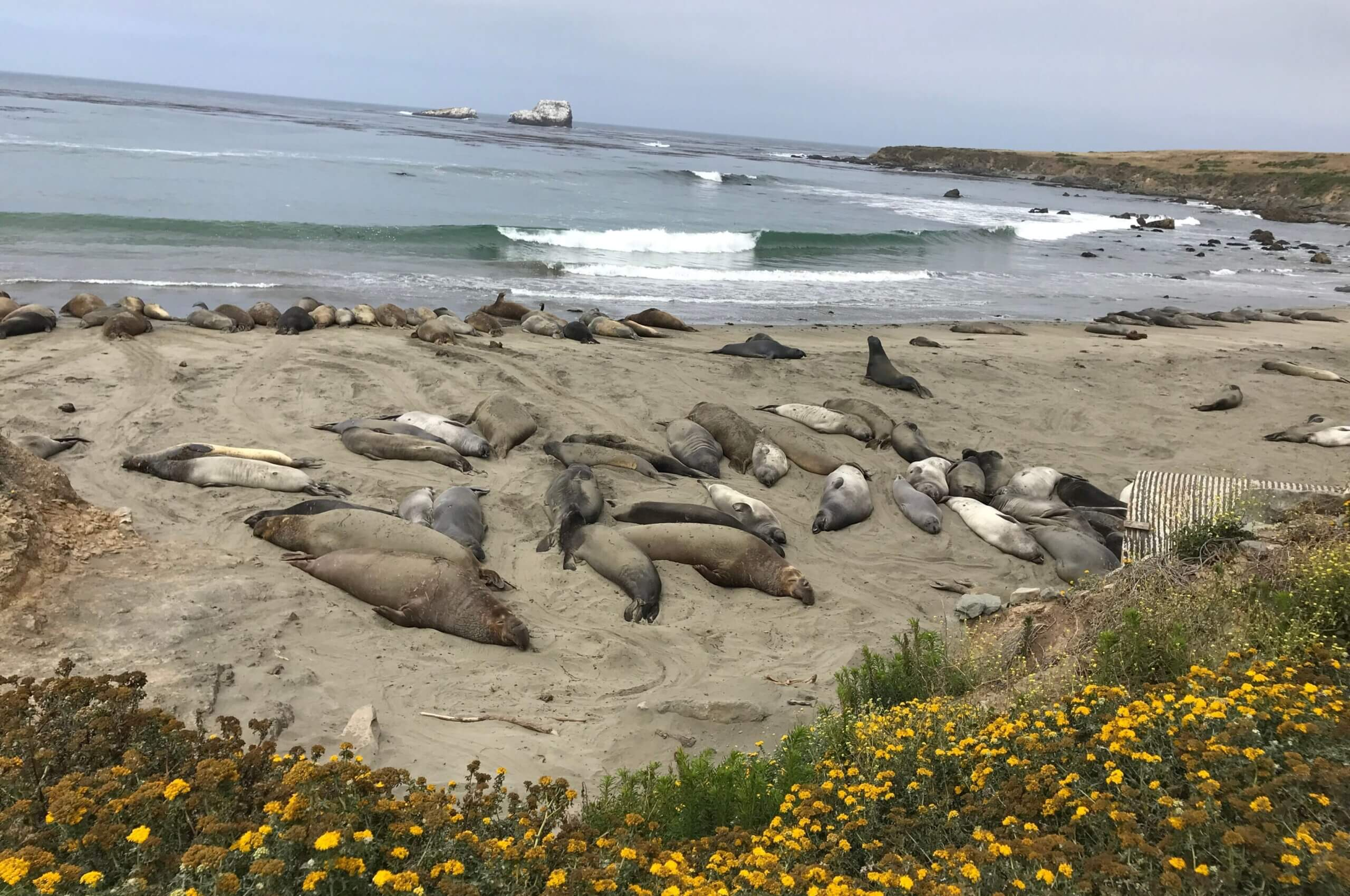 Hot Spots to See Wildlife in California