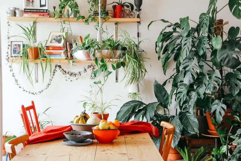 5 Easy Sustainable Solutions to Make in Your Home